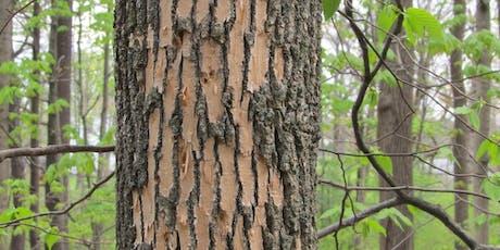 FPFD Suspect Tree Training tickets