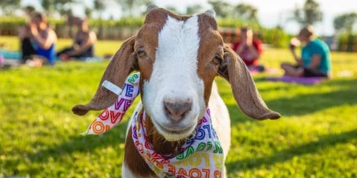 Goat Yoga Rockin' the 80's! at Spyglass Ridge Winery