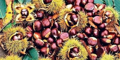 Hadau'r Gaeaf - Winter Seeds