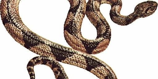 Sunday FunDay - Yikes! Snakes!