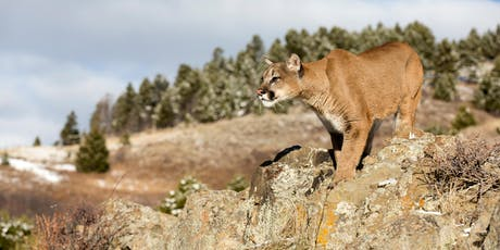 Living with native carnivores: How to prevent conflicts and coexist with Oregon's iconic cougars and other wildlife tickets