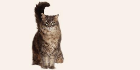 Online Cat Foster Orientation 11/13/19 tickets