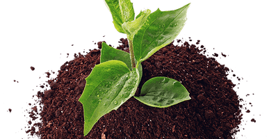 Building the Biota of Soil with Biochar