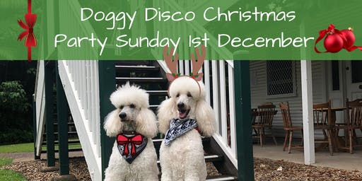 Doggy Disco Christmas Party