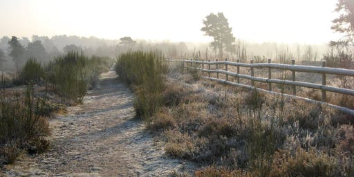 Heathland Magic at Wildmoor Heath