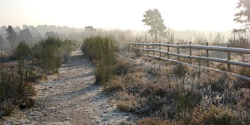 Heathland Magic at Wildmoor Heath