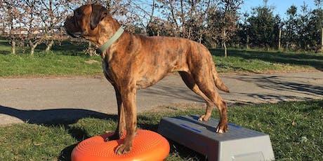 Massage, body & balance: jouw hond soepel en fit tickets