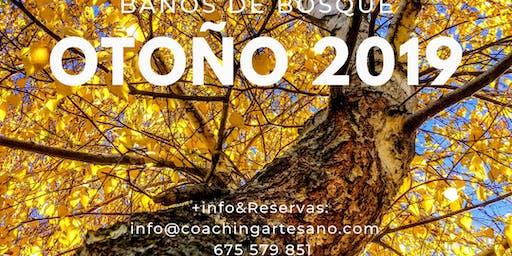 Baño de Bosque 2 Nov. - Otoño en Bosque de la Herreria, El Escorial