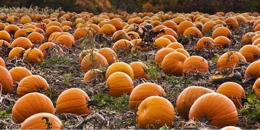 Pumpkin Wheelie Workshop 2 (All Hallows)