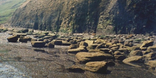 Sandsend, Yorkshire - GEOLOGICAL AND FOSSIL FIELD TRIP