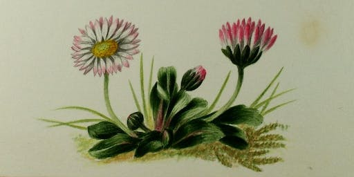 Museum Insight: Flora and Fashion - Flowers at the Castle and Museum