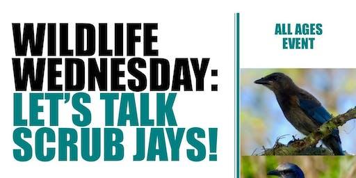 Wildlife Wednesday Let's Talk Scrub Jays