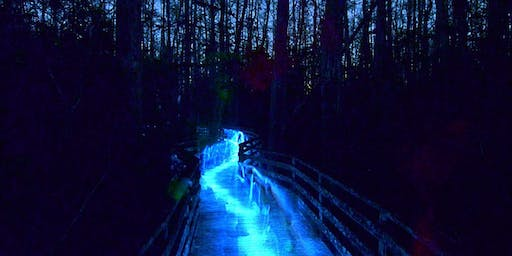 Night Walk at Corkscrew Swamp Sanctuary