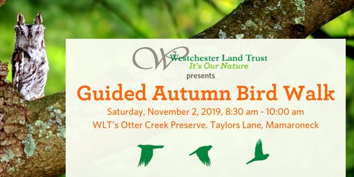 Guided Autumn Bird Walk