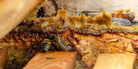 Propolis Make and Take Workshop tickets