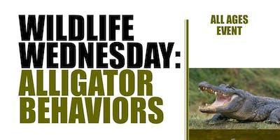 Wildlife Wednesday: Alligator Behaviors