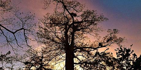 Sunset Stroll at Corkscrew Swamp Sanctuary tickets