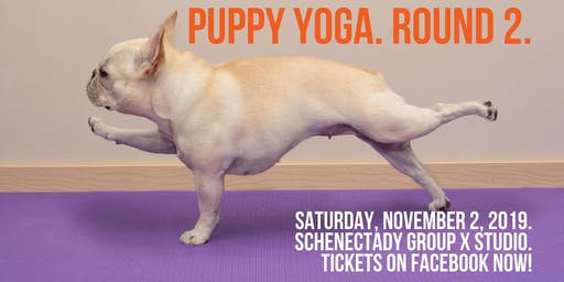 Schenectady PUPPY Yoga!