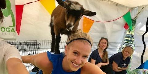 Goat Yoga Nashville- Touchdown November