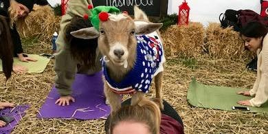 Goat Yoga Nashville- Happy Holiday's Class