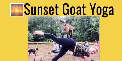 Sunset Goat Yoga-Gentle Flow Yoga for Beginners
