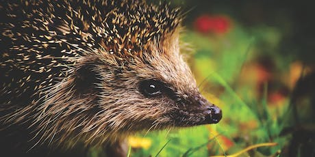 All about hedgehogs! tickets