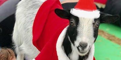 Goat Yoga Nashville- Happy Holiday's Class