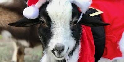 Goat Yoga Nashville- Happy Holiday's Christmas Eve Class