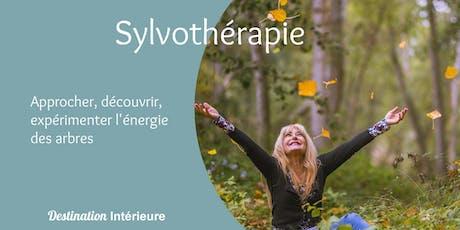 Expérimentez la Sylvothérapie : les secrets bienfaisants des arbres billets