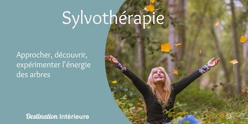 Expérimentez la Sylvothérapie : les secrets bienfaisants des arbres