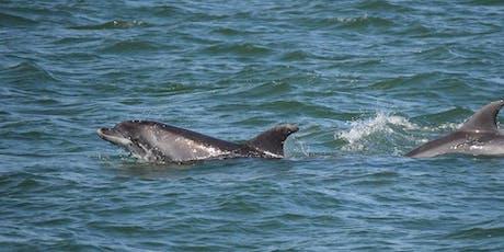 RSPB Dolphinwatch, by Sadie Gorvett RSPB tickets