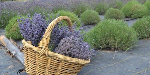 Kansas Lavender Experience