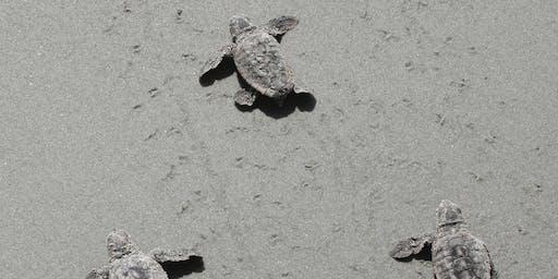 Turtle walk weekend