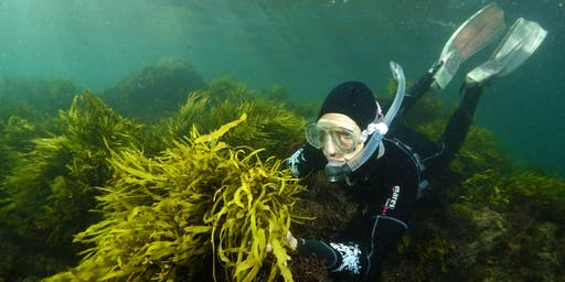 Operation Crayweed: exploring Sydney's underwater forests - 11AM SESSION