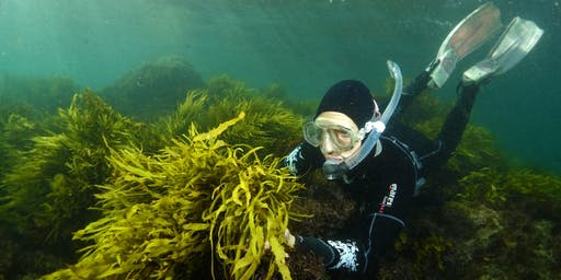 Operation Crayweed: exploring Sydney's underwater forests - 1:30PM SESSION