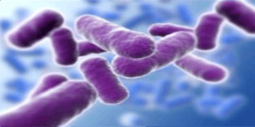 Anthrax Exposure Simulation