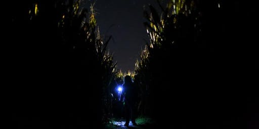 Flashlight Corn Maze & Pumpkin Picking at Stonehaven Farm