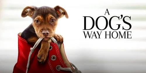 FREE Outdoor Movie Night - A Dog's Way Home