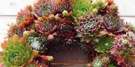 Living Sedum Wreath