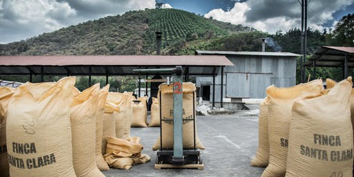 Introducing two stunning coffees from Antigua!