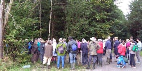 Clonad Forest Ecology Woodland Walk tickets