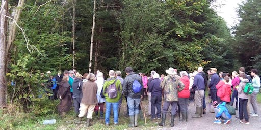 Clonad Forest Ecology Woodland Walk