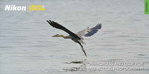 Nikon Learn & Explore | Mirrorless and DSLR for Wildlife and Action Photography