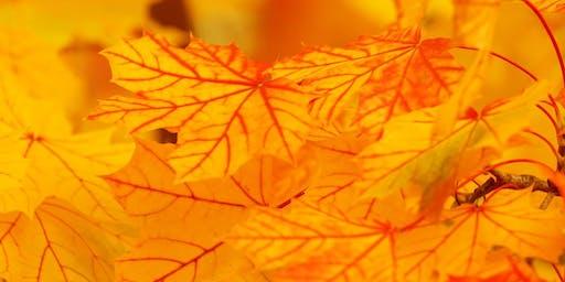 Autumn Fun – Leafy Lytham Library Tree (Lytham) #halftermfun