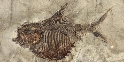 A Scottish Fishing Trip: The Fossils of Achanarras