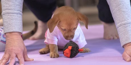 Puppy Yoga - Fort Collins tickets