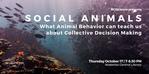 Social Animals: What Animal Behavior Can Teach Us About Collective Decisions