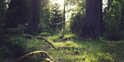 Session 2 2019-20 Eyes of the World Nature Immersion with Dawn Jenkins Grades K-4 Tuesdays (90 minutes)