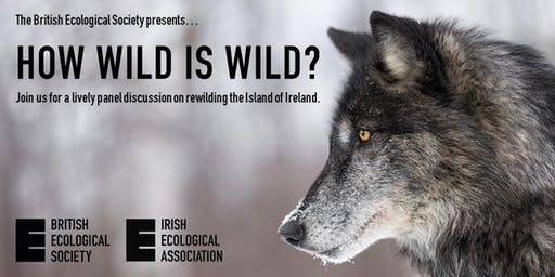 How wild is wild? Rewilding the island of Ireland.