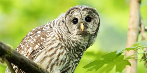 Owl Prowl – Seven Lakes State Park